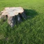 stump_grinding_1